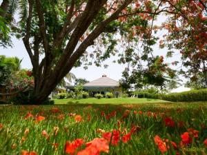 CasaTortuga Tropical-Garden